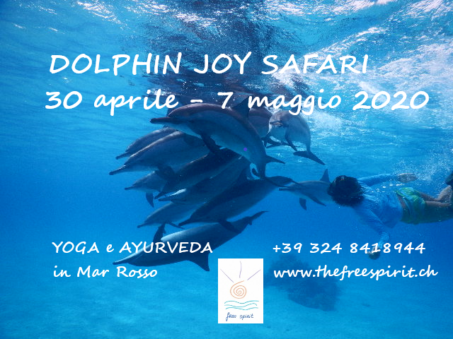 Dolphin Joy Safari