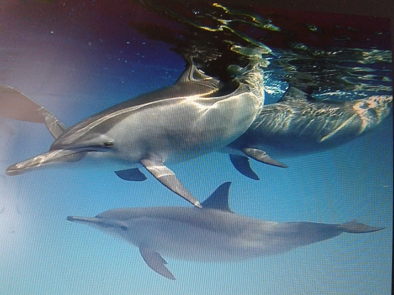 Dolphin Friends 1